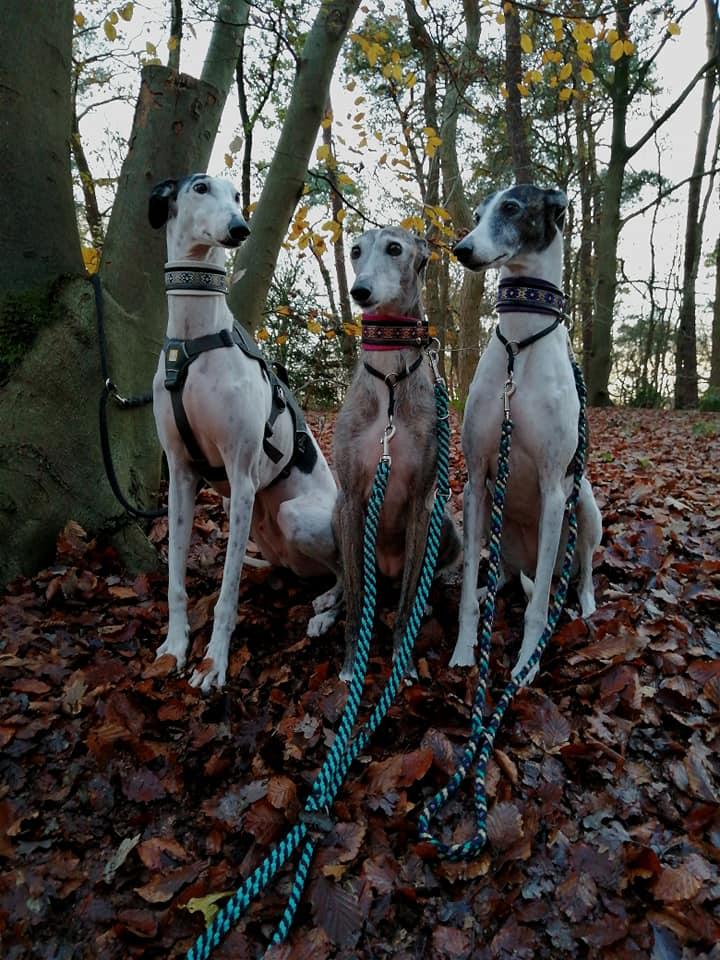 Clyde, Tigra & Bonny