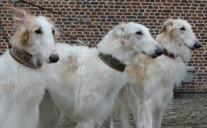 Selma, Skyluna & Suka